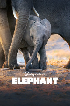 Elephant - Read More